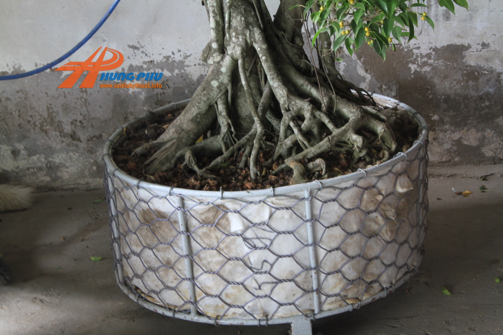 vải địa kỹ thuật trồng cây