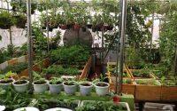 Túi vải trồng cây may từ Vải địa kỹ thuật ART, tạo vườn rau sạch