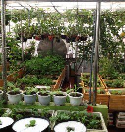 Túi vải trồng cây